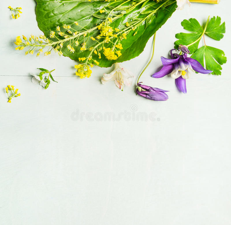Spring Green Leaves And Flowers Background With Plants: Spring Or Summer Garden Flowers With Leaves On Light Green