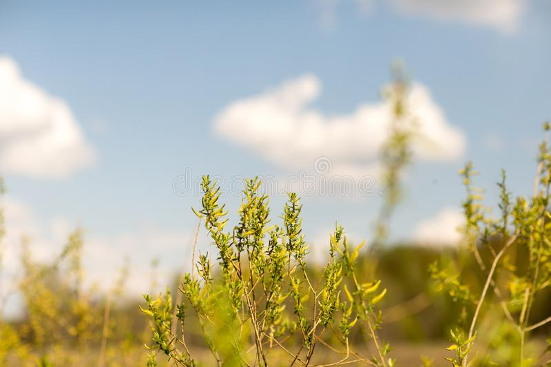Spring-summer landscape in good weather stock photo