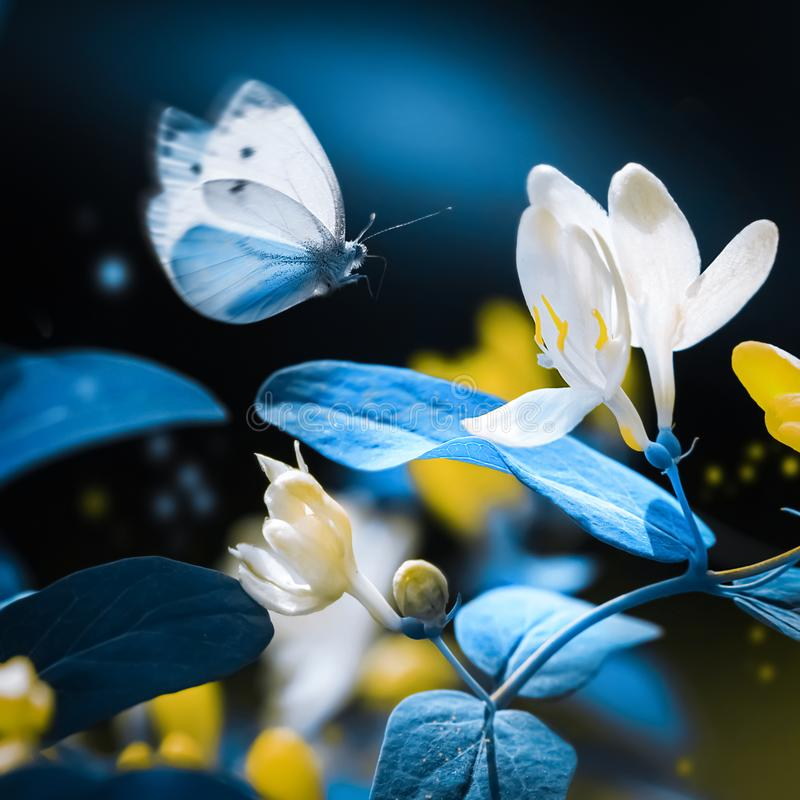 Spring and summer natural background. Beautiful blue butterfly on a background of yellow flowers and buds in the garden. royalty free stock photography