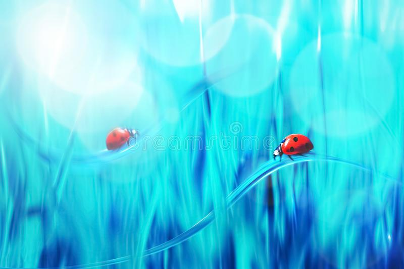 Spring summer natural background. Two Red ladybugs on a blue grass. Artistic creative bright multi-colored image. Spring summer natural background. Two Red stock photos
