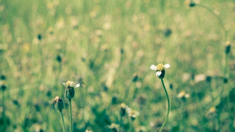 Spring summer  nature little flowers, nature beautiful, toning design, sun plants.wild grass vintage green nature background stock photo