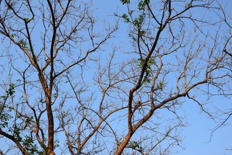 Spring summer a new leaf. Spring summer a new leaf dry wood stock photos