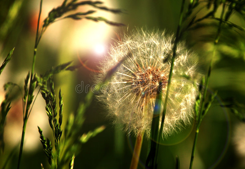 Spring sun and plants stock image