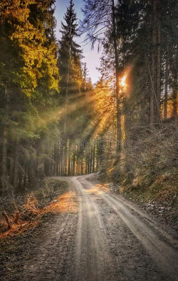 Spring sun rays among the trees that shine the forest alley. Spring sun rays trees shine forest alley royalty free stock photos