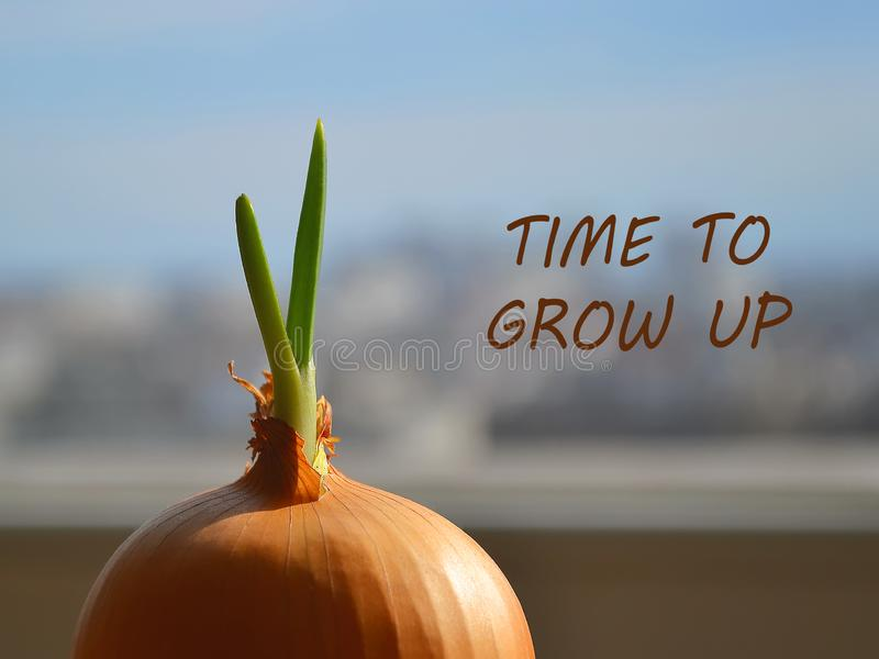 The spring sun shines through a window on a sprouted onion with fresh green leaves. Inscription Time to Grow Up. Concept of awakening and the beginning of stock photos