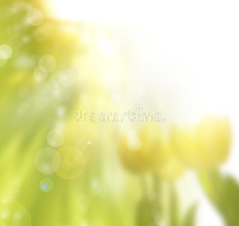 Spring Sunny Floral Background Stock Photography