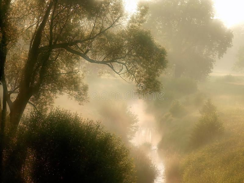 Download Spring Sunrise With Meadow In The Fog Stock Image - Image of autumn, environment: 9793003