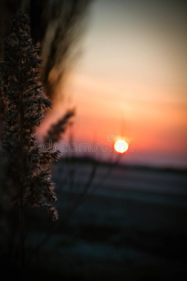 Spring sunset in the field royalty free stock images