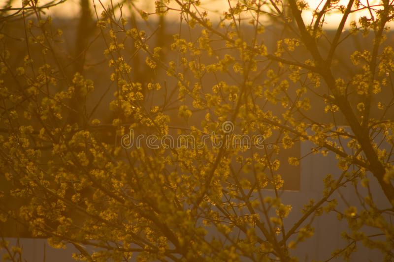 Spring sunset in the field stock photos
