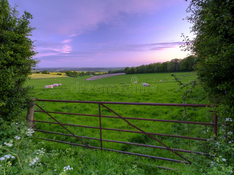 Spring sunset over South Downs field of sheep with the Solent and Isle of Wight in the background, Hampshire, UK royalty free stock photos