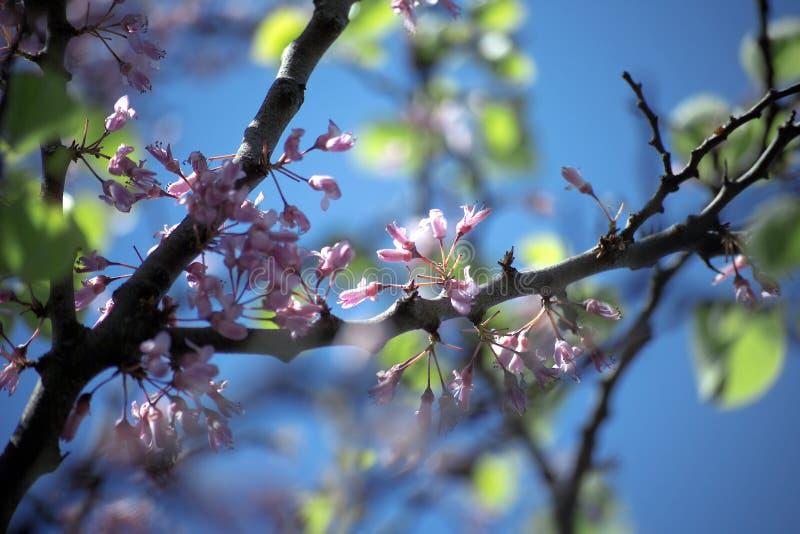 Download Spring Sunshine Stock Image - Image: 4268421