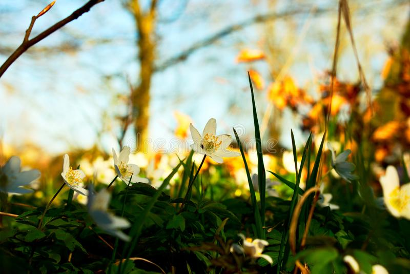 Spring sweden royalty free stock images