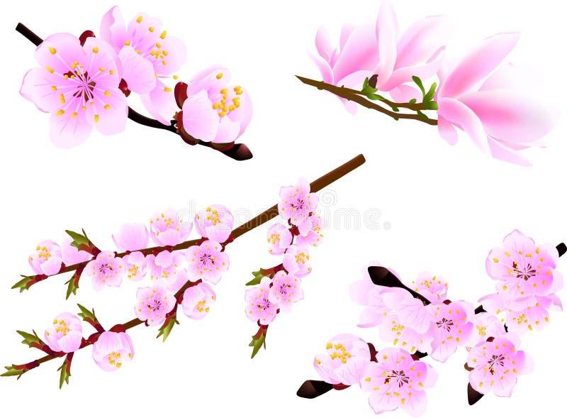 Spring takje (kers en magnolia) inzameling op stock illustratie