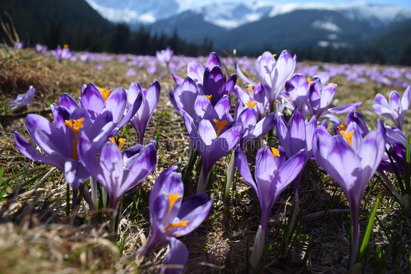 Spring in Tatra Mountains stock images