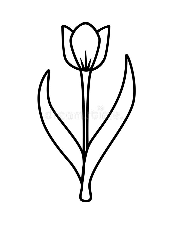 Spring tender tulip flower with two leaves and a stem. Stylized image of a tulip for a logo or coloring - stock illustration. royalty free illustration
