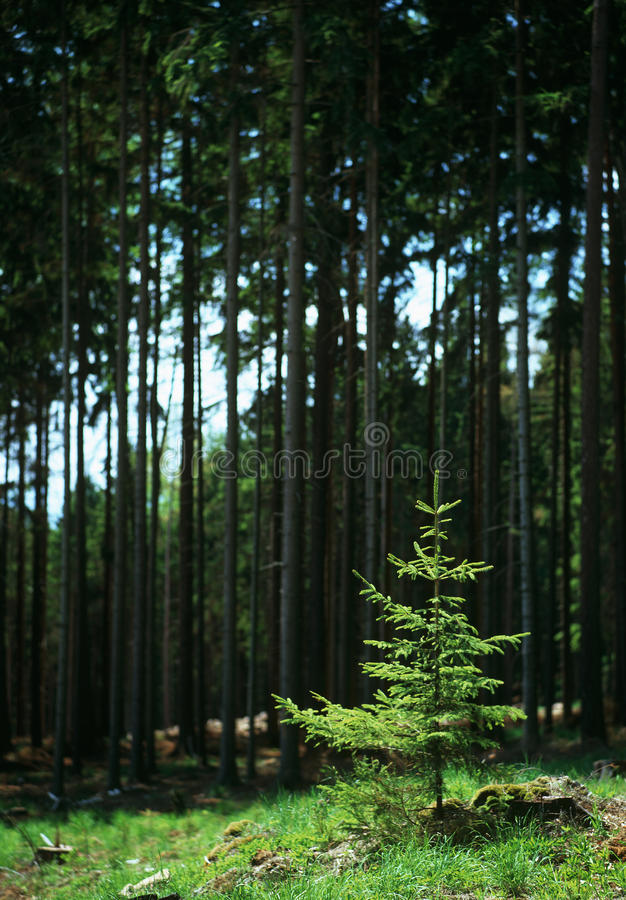 Download Spring Tenderness stock image. Image of trees, atmosphere - 19674763