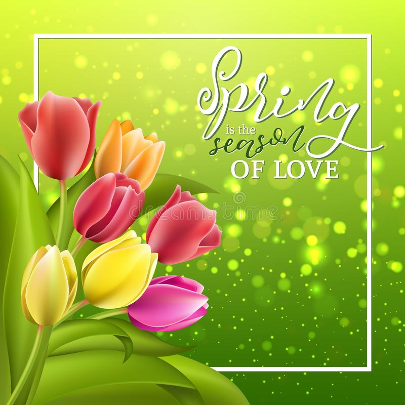 Spring text with tulip flower. Vector illustration EPS10. Spring card with tulip flowers on sparkle yellow green background. Vector illustration EPS10 stock illustration