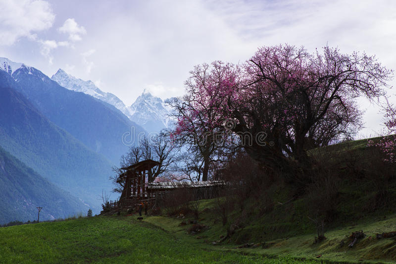 Spring in the Tibetan Plateau stock images