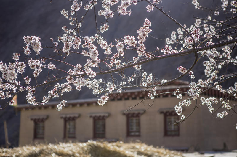Spring in the Tibetan Plateau stock photography