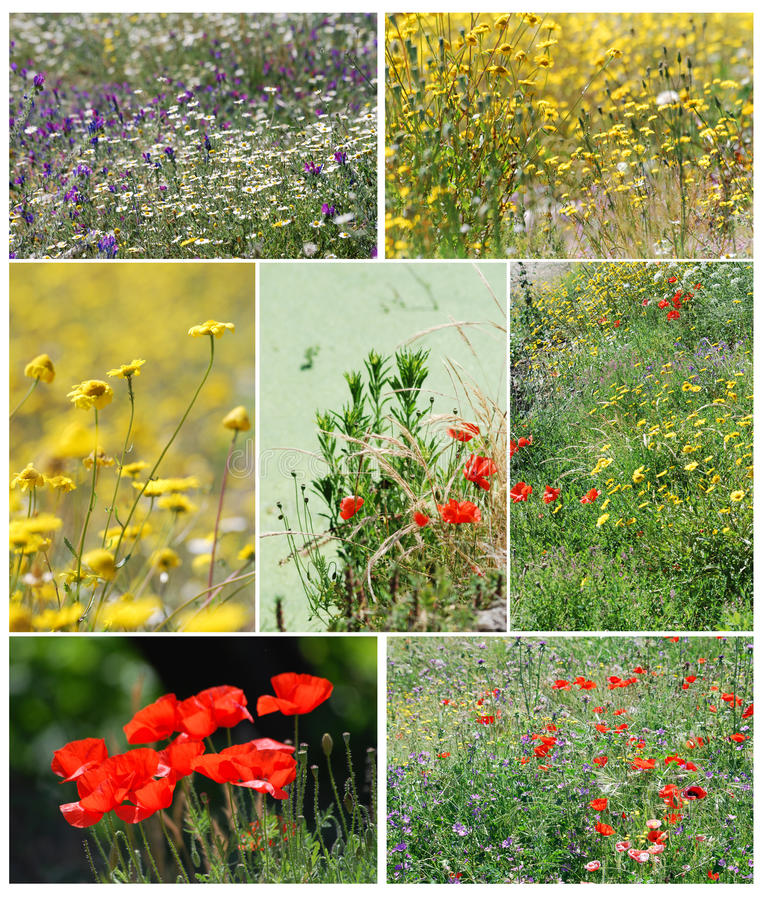 Spring time. Several images of fields of flowers in spring royalty free stock photo