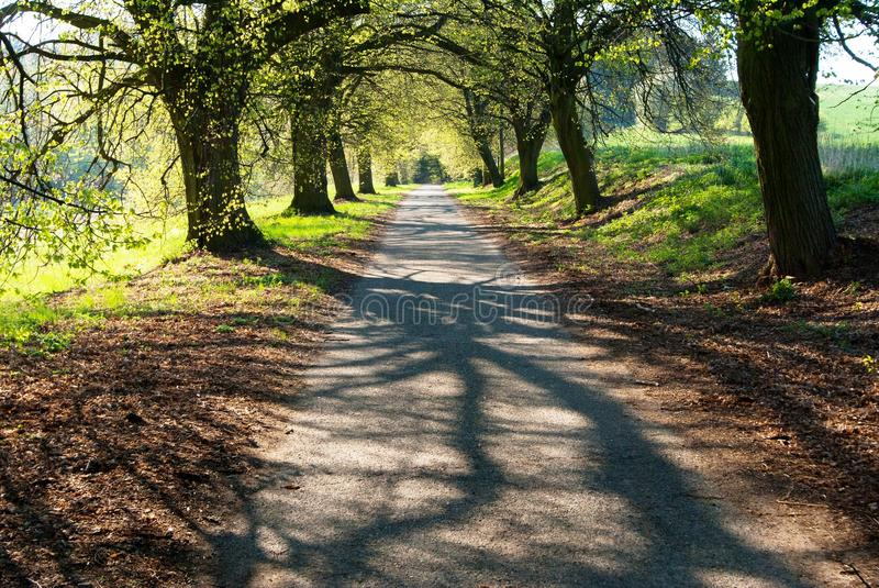 Download Spring Time Aley Of Lime Tree Stock Image - Image: 29940307