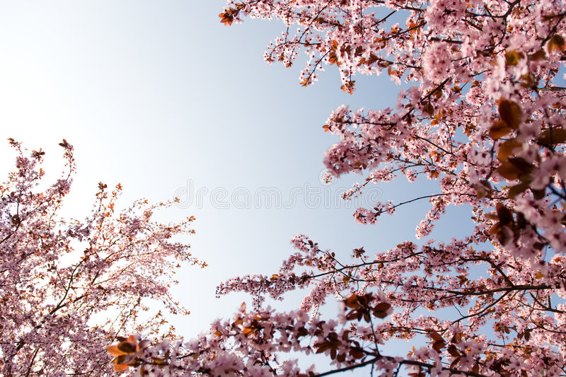 Spring time beauty royalty free stock photos