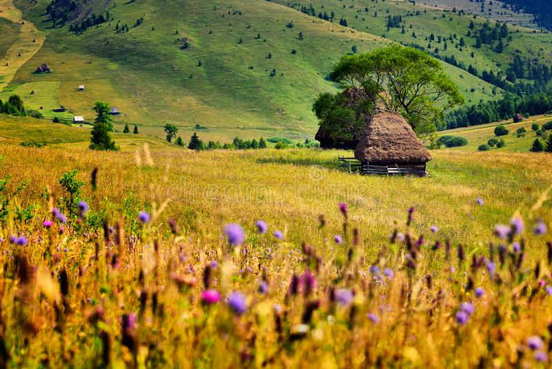 Spring time in Carpathian mountains with old farmer house. And wild flowers stock image