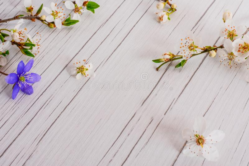 Spring time concept, Easter, flowers background. royalty free stock image