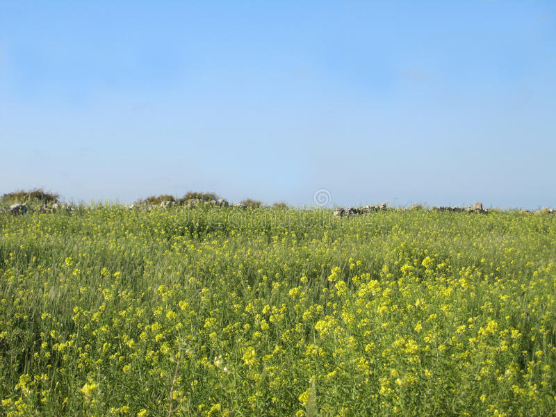 Spring time - a field on a clear day stock images