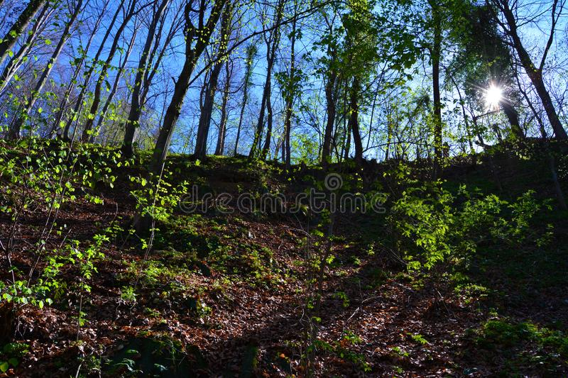 Spring time in the forest, sunshine between trees. Spring time forest sunshine trees wood wild in indoor hill shadow side nature natural leaves green brown royalty free stock images