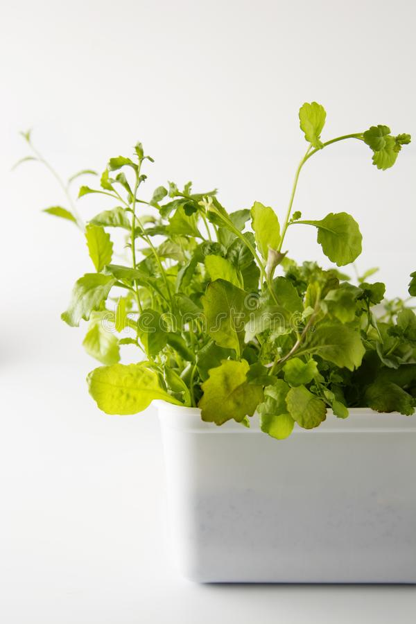 Spring time. Fresh and green leaves of flower, plant sprout. Gardening concept with copy space. Selective focus stock images