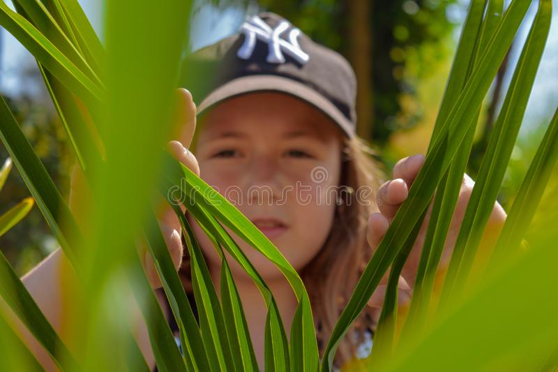 Hidding behind the green leaves stock images