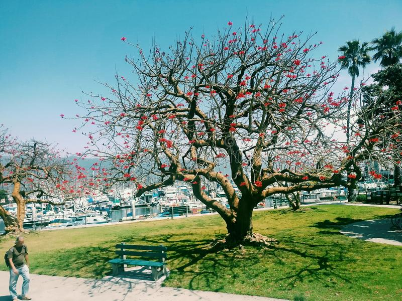 Spring time image taken in California. This image showcases the very beautiful spring time blossom in US taken at Santa Barbara California royalty free stock image