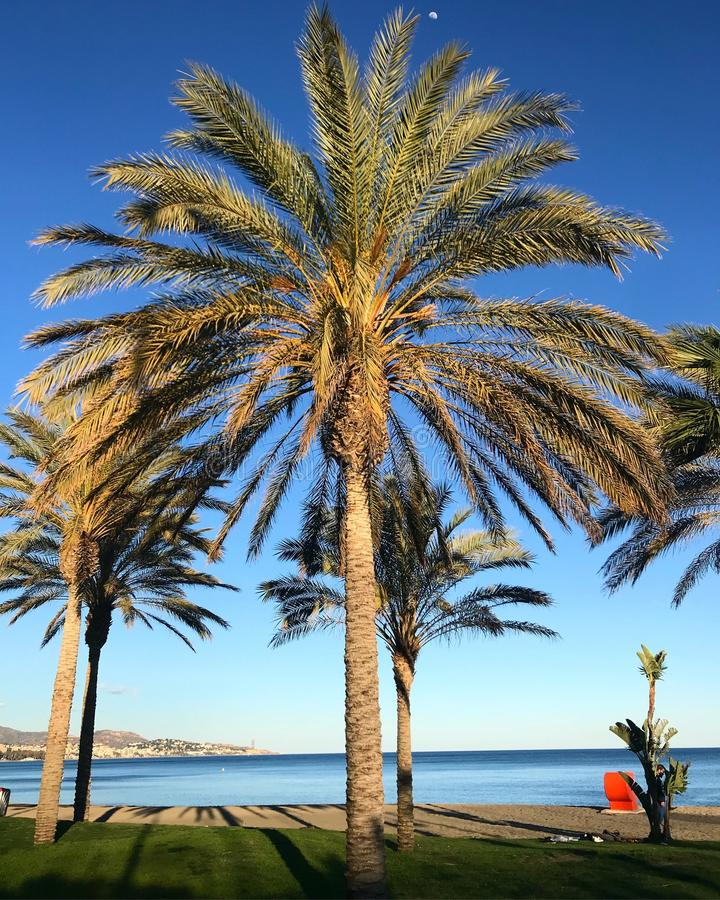 Spring time in malaga spain palms royalty free stock photos
