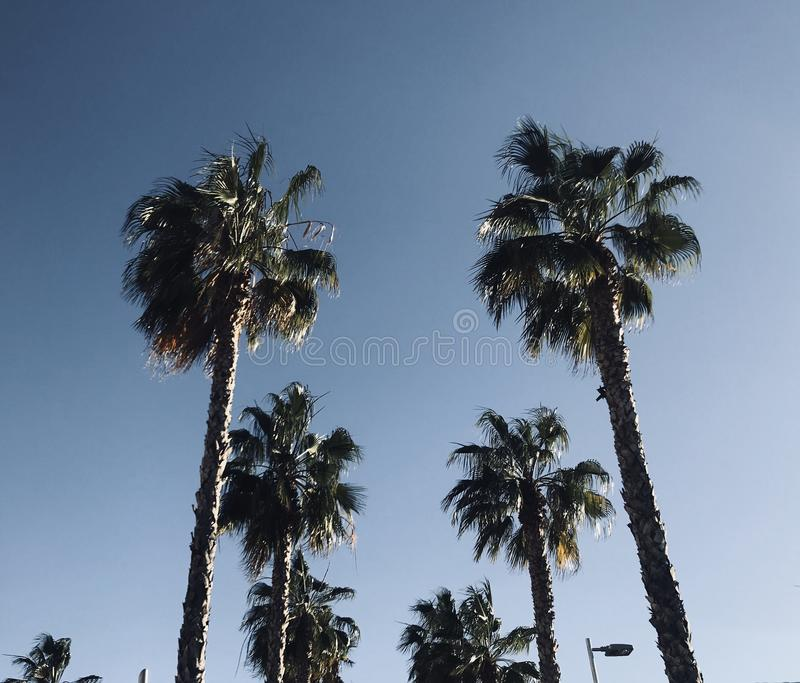 Spring time in malaga spain palms and clouds royalty free stock photo