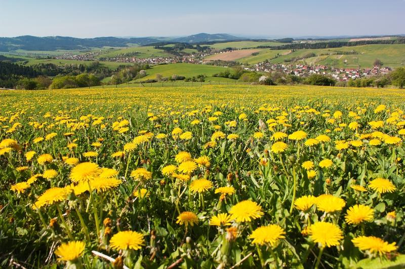 Download Spring Time And Meadow With Common Dandelion Stock Photo - Image: 27145970