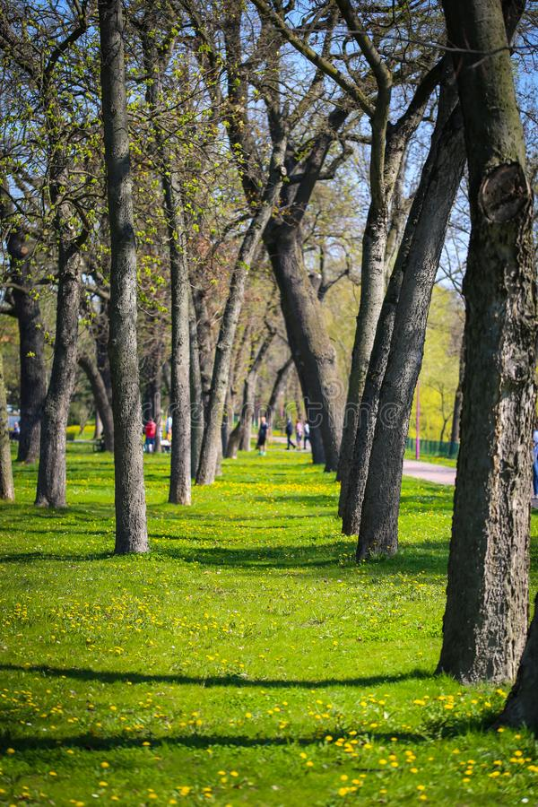 Spring time in a park. In Timisoara stock photography