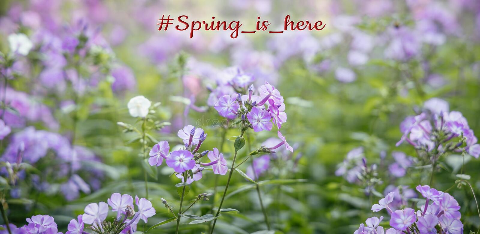 Spring time post card spring is here text on blooming flower bed nature photography royalty free stock photography