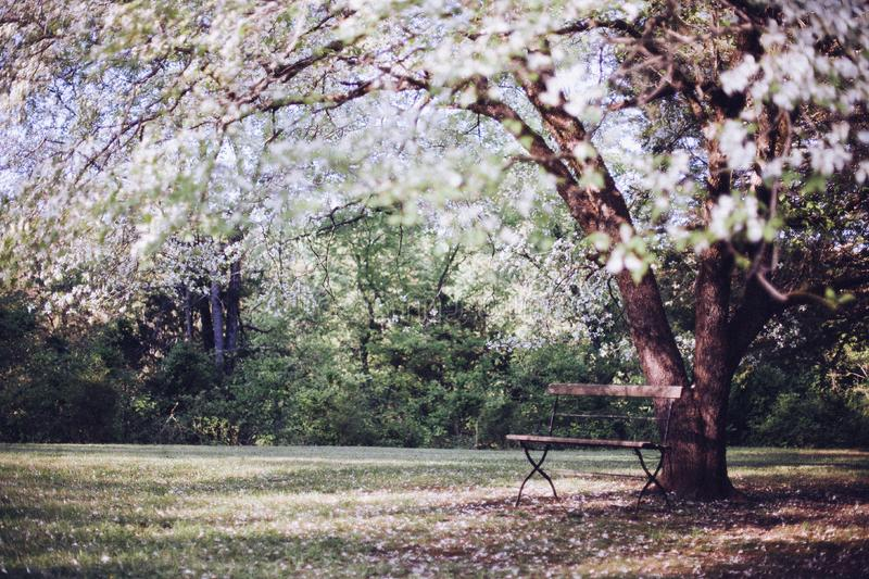 Spring Time Tree White Blossoms Wooden Bench Outdoors stock photos