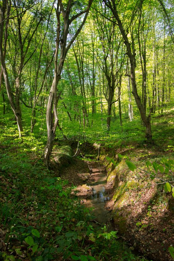 Spring Time For Turkey, April 2019, Belgrad Forest, Bright Day royalty free stock photo