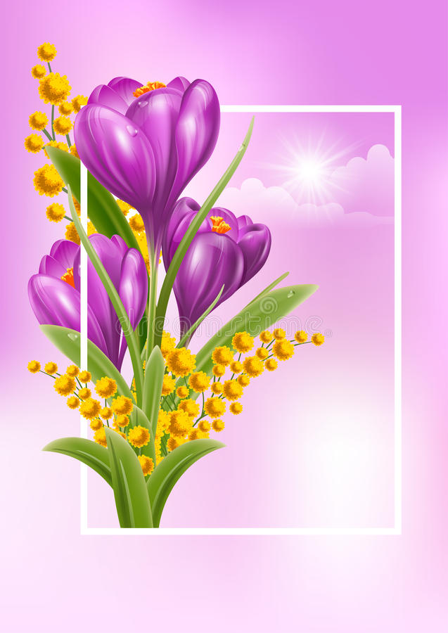 Spring Time. Vector Fresh Spring Illustration with Spring Flowers Crocuses and Mimosas. Floral Spring Bouquet in frame. Spring Time stock illustration