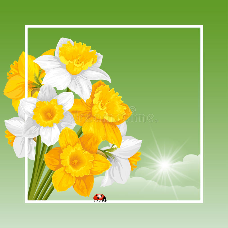 Spring Time. Vector Fresh Spring Illustration with Spring Flowers Yellow and White Daffodils. Floral Spring Bouquet in frame. Spring Time stock illustration