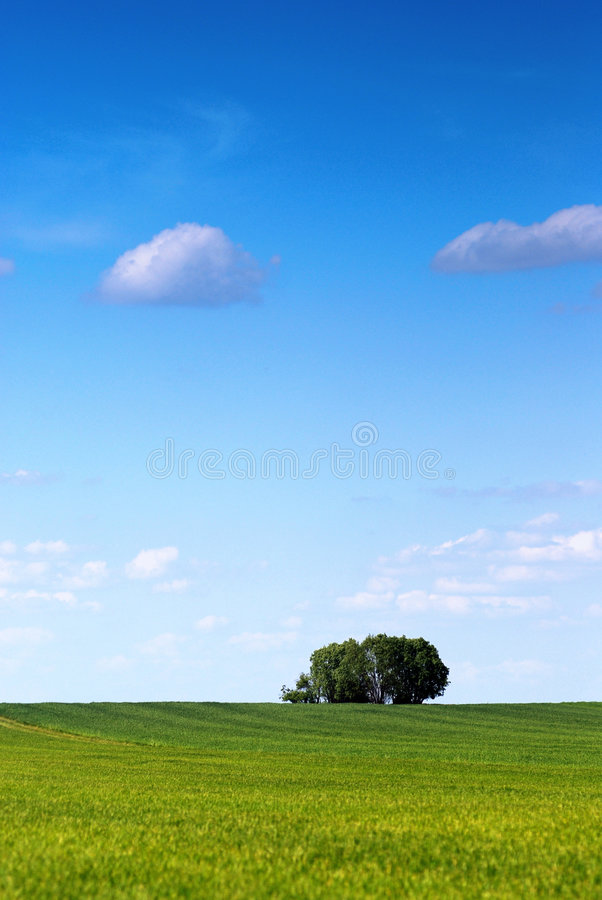 Download Spring tree stock photo. Image of clear, holiday, greenery - 2384750