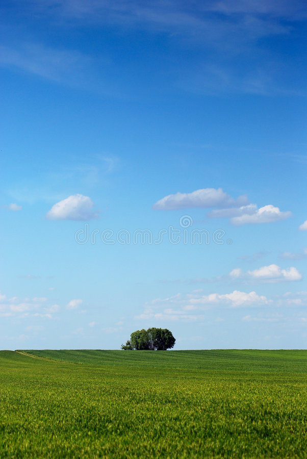 Download Spring tree stock photo. Image of landscape, poland, area - 2384968