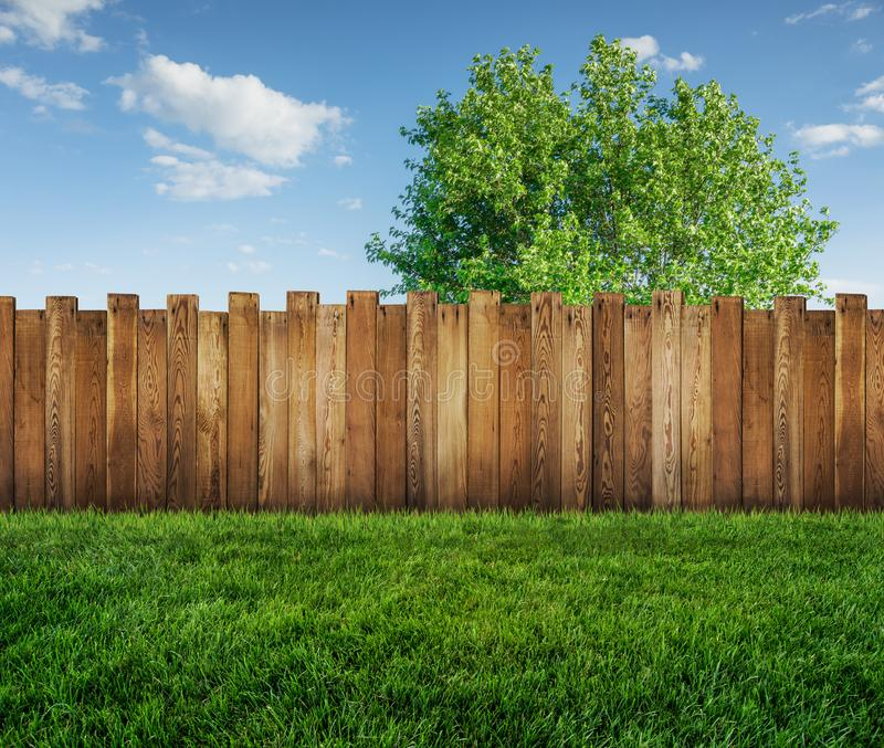 Spring tree in backyard and wooden fence royalty free stock photography