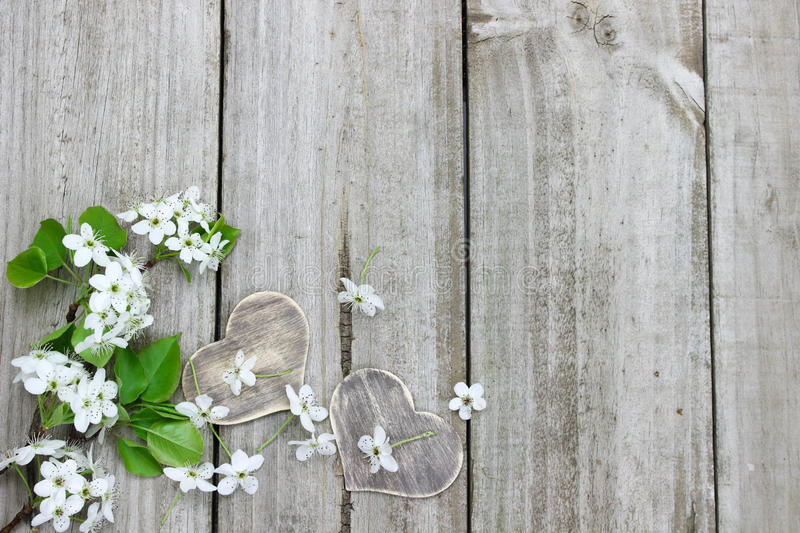 Spring tree blossoms and wood hearts border wooden fence. White flowers (pear tree blossoms) and wood hearts border wooden background royalty free stock photo