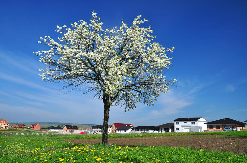 Spring tree countryside stock photo
