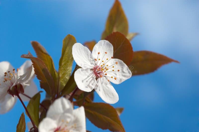 Spring tree flowers royalty free stock photos