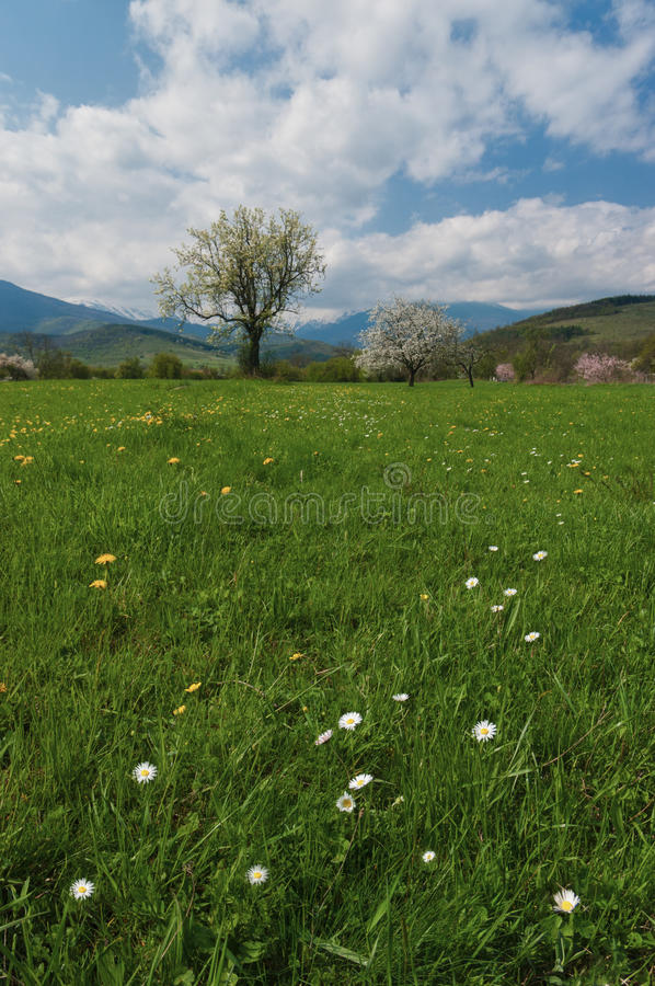 Spring tree with green grass royalty free stock photos