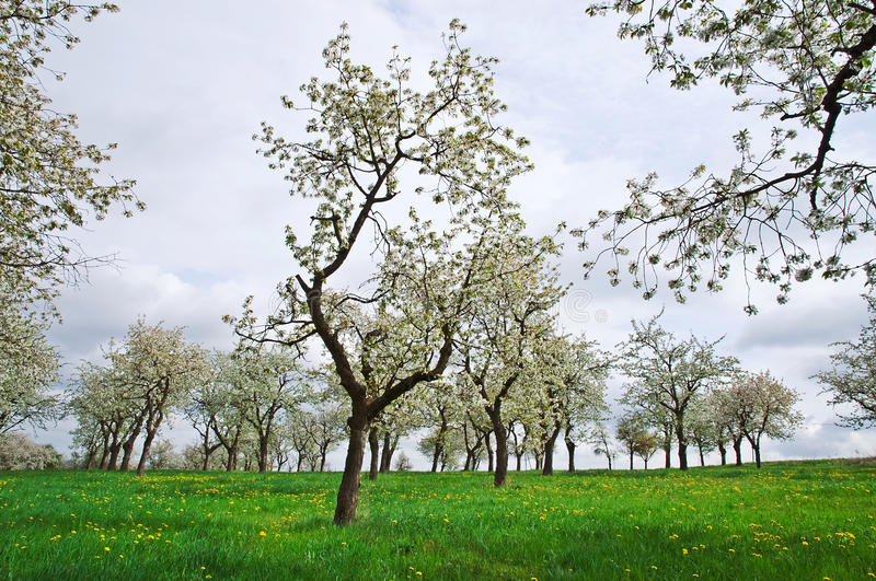 Download Spring Trees Stock Image - Image: 14105261